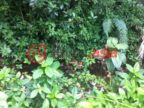 危地马拉瓜地马拉米斯科的房产,614 CIALITOS,编号27121213