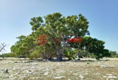 澳大利亚南澳大利亚埃利斯顿的乡郊地产,20546 Flinders Highway,编号33650444