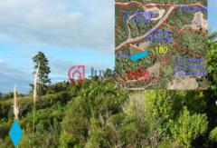 新西兰北部地区的土地,3508 Pumpkin Hill,编号36743329